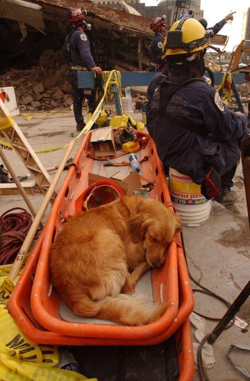 perro de rescate 2