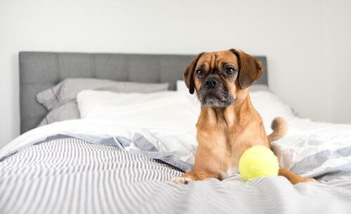 perro en tu cama