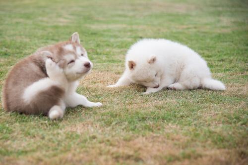 ¿Pueden las garrapatas matar a tu perro?