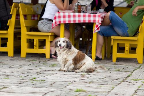 ¡No sin ti! ¿Qué plan puedes hacer con tu perro?