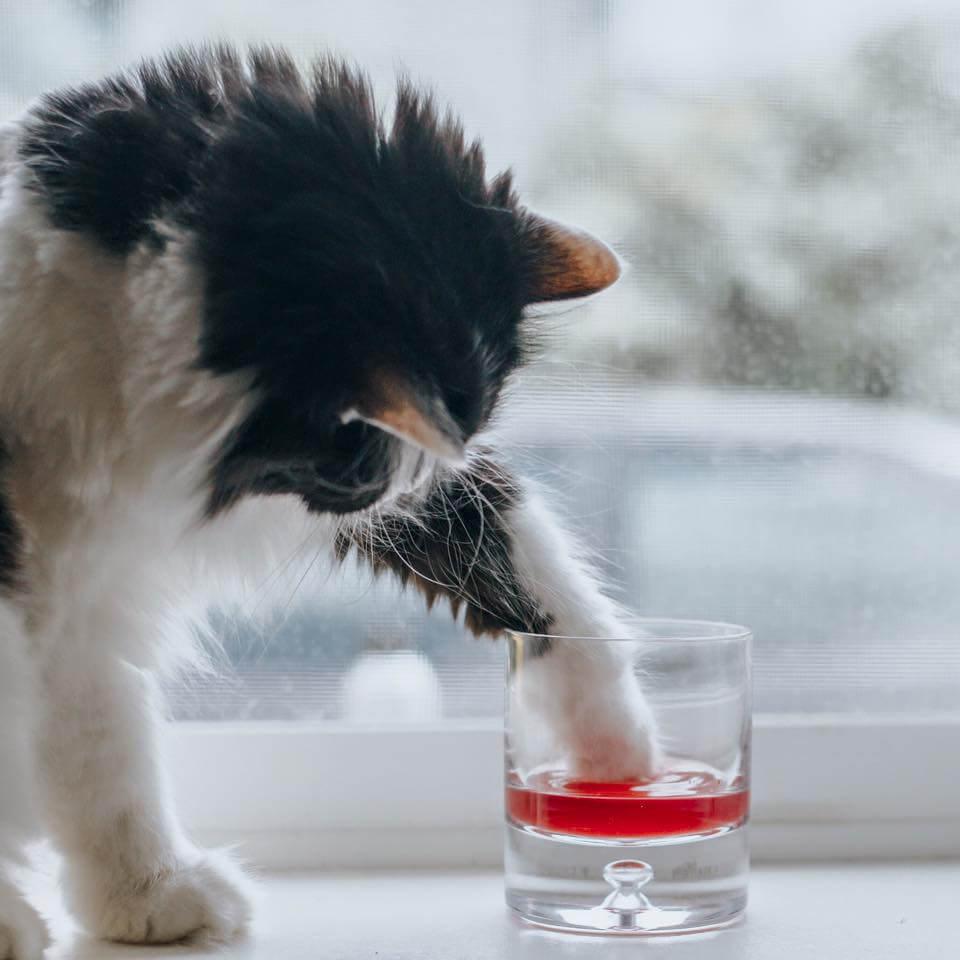 vino para gatos 2