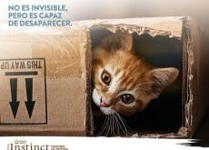 Gato_No_es_invisible_pero_es_capaz_de_desaparecer-500x376