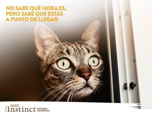 Gato_No_sabe_qué_hora_es-500x375