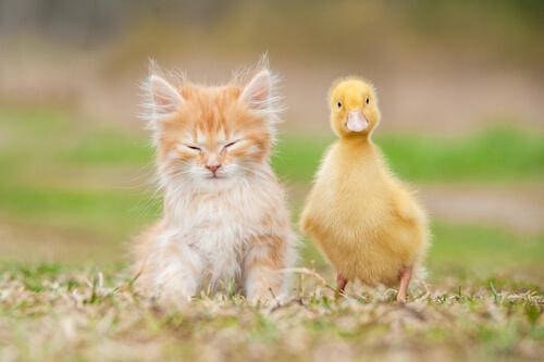 Qué animales pueden ser mascotas y cuáles no