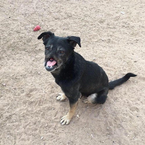Anubis, el perro que recorrió 11.000 kilómetros para encontrar un hogar