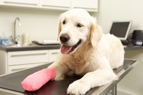 ¿Qué debe tener el botiquín para el perro?