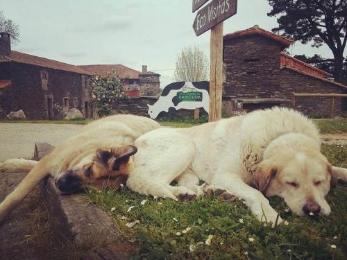 Una marca de lácteos ecológicos lanza una campaña de adopción de perros