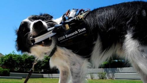 Crean un chaleco que permite comunicarse con los perros
