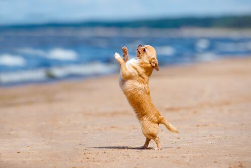 ¿Ya conoces el Dogdancing?
