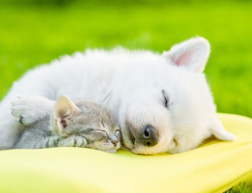 el descanso en las mascotas