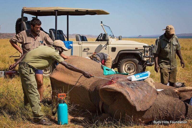 elefante tiroteado
