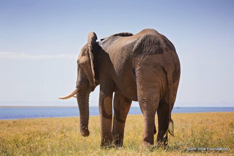elefante tiroteado 3