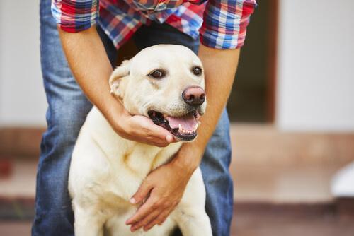 epilepsia en los perros