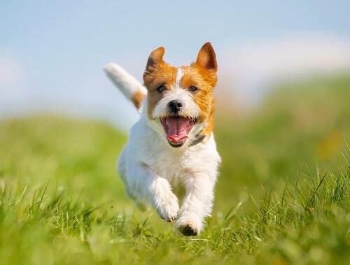 5 soluciones para el estreñimiento en los perros