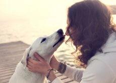 infecciones por besar a los perros
