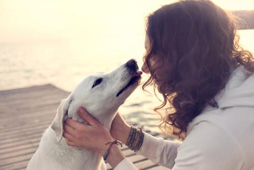 Qué infecciones podemos contraer si besamos a nuestro perro en la boca