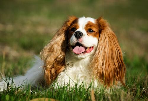 La hipertensión en perros puede ser un alarma de otras enfermedades