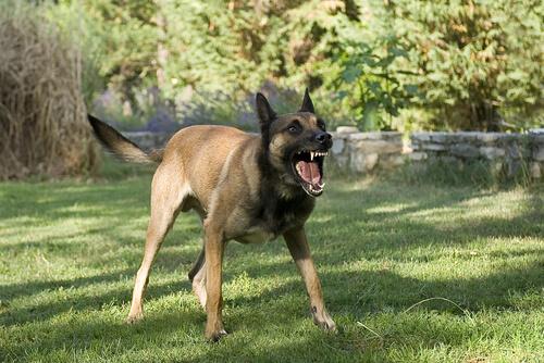 Campañas contra la rabia para los perros