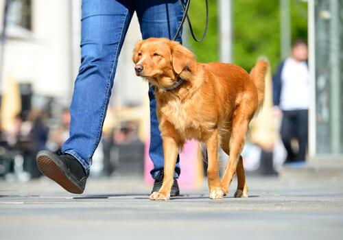 ¿Cómo evitar que mi perro se queme las patas en verano?
