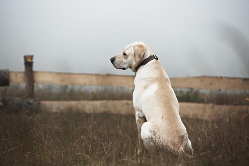 Cómo actuar con los perros abandonados