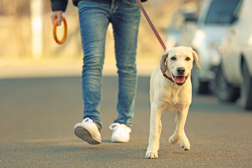 A dog and its owner on a walk.