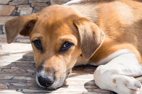 La sabiduría de un perro callejero