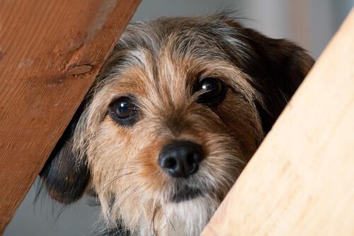 Mi perro tiene miedo a las personas, ¿qué hago?