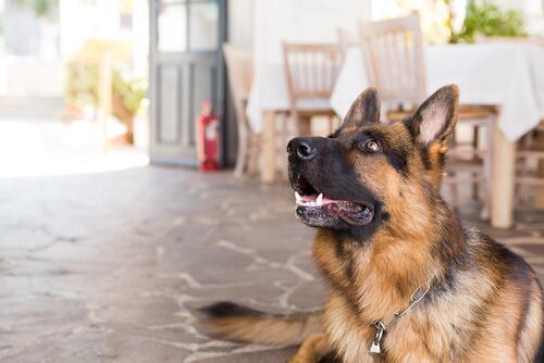 ¿Y si no me puedo llevar a mi perro de vacaciones?