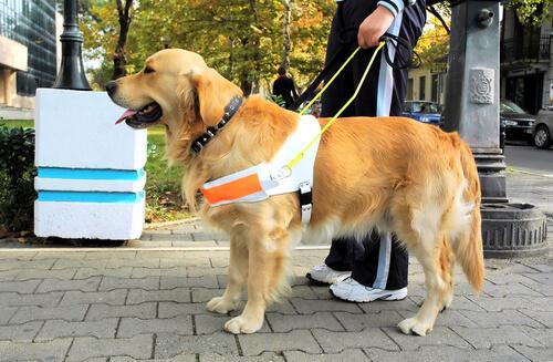 Los perros guía de la ONCE
