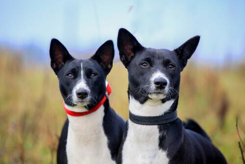 ¿Cómo proteger los oídos del perro en el verano?