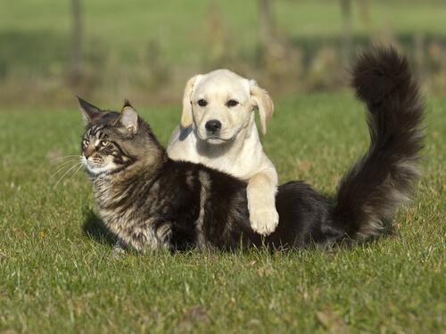 quemaduras en el perro y el gato