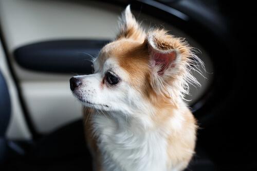 Un hombre rompe las ventanas de un BMW para salvar la vida de un perro