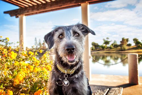 tu perro en verano