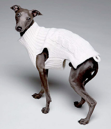 A dog in a knitted jumper.