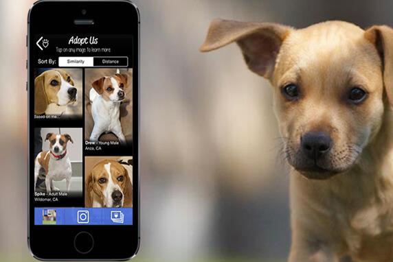 aplicativo para adoção de cachorro