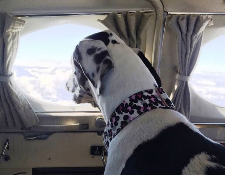 Wings of rescue salvan perros 3