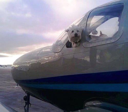 Conoce Wings of Rescue, pilotos voluntarios que salvan la vida a perros