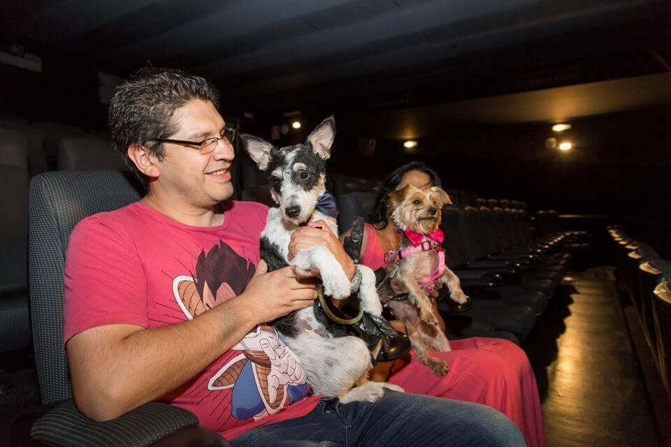 acceso de los perros al cine 2