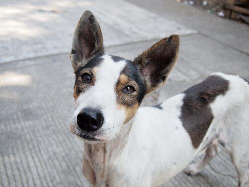Una emotiva campaña para adoptar perros abandonados