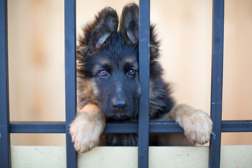 Por estas razones adoptar una mascota cambiará tu vida