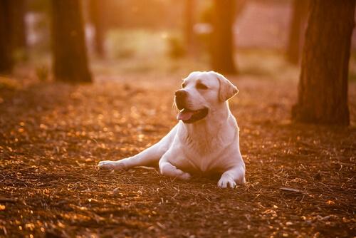 aprender de tu perro