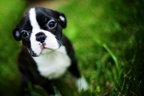 autocontrol en los perros