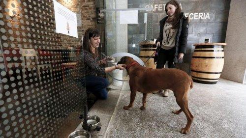 BarFriendly, los primeros restaurantes para perros