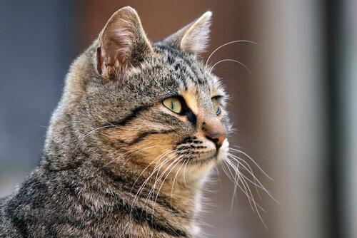 Los bigotes del gato cumplen varias funciones importantes.