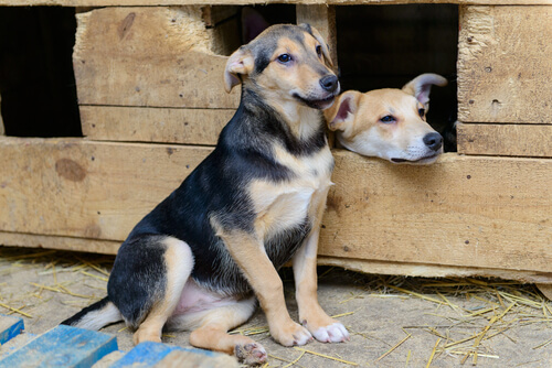 casas para perros callejeros