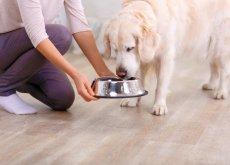 comida fresca para perros