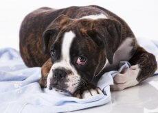 cosas que rompen el corazon de nuestro perro