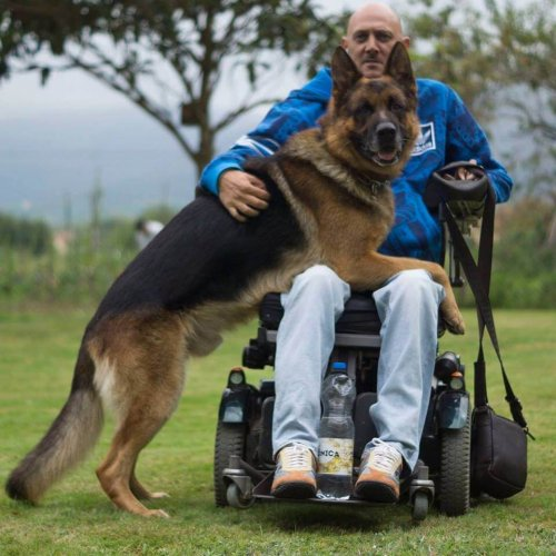 el amor sin limite de un perro a su dueño 2