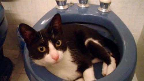 Muki: el gato que usó sus 7 vidas