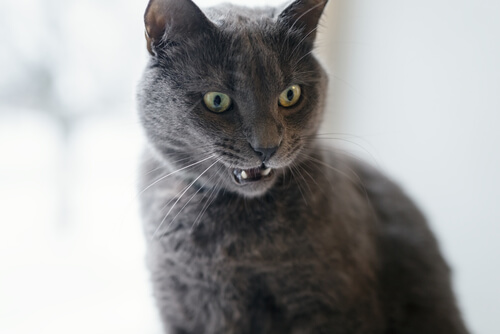 el gato se enfadó